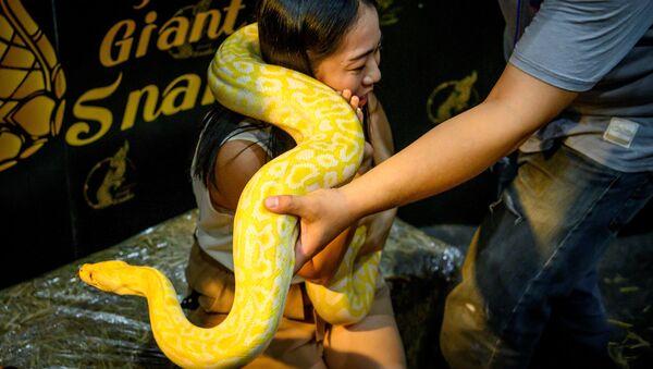 Khách tham quan với con trăn tại hội chợ thú cưng ở Thái Lan - Sputnik Việt Nam