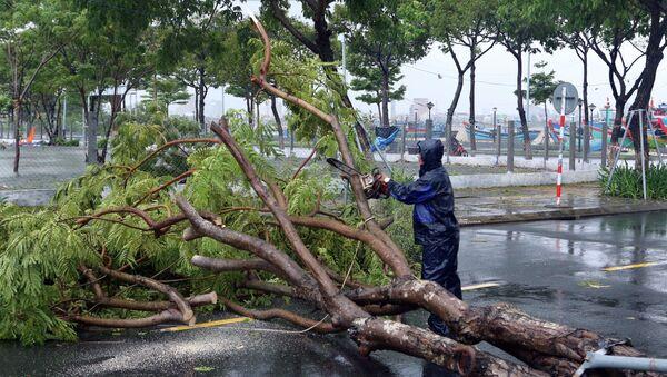 Xử lý các cây xanh bị ngã đổ ra đường gây ách tắc giao thông tại quận Sơn Trà. - Sputnik Việt Nam