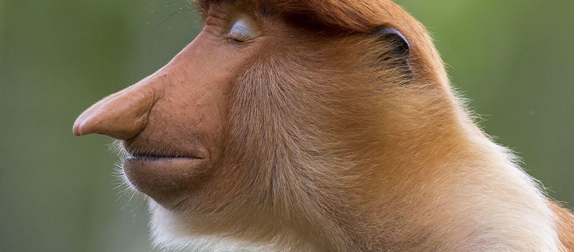 Ảnh «Tư thế» của Nhiếp ảnh gia Đan Mạch Mogens Trolle, người chiến thắng ở hạng mục Chân dung động vật, cuộc thi Wildlife Photographer of the Year 56 - Sputnik Việt Nam, 1920, 14.10.2020