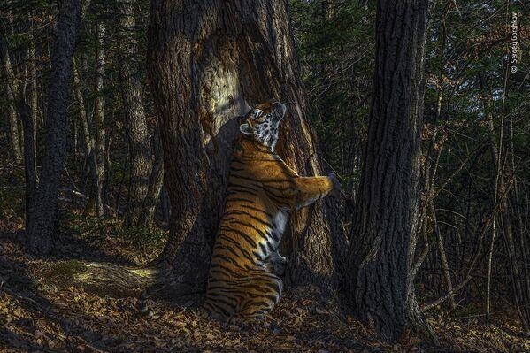 Bức ảnh The Embrace (Cái ôm) của nhiếp ảnh gia  Nga Sergey Gorshkov, giành chiến thắng trong cuộc thi Wildlife Photographer of the Year 56 - Sputnik Việt Nam