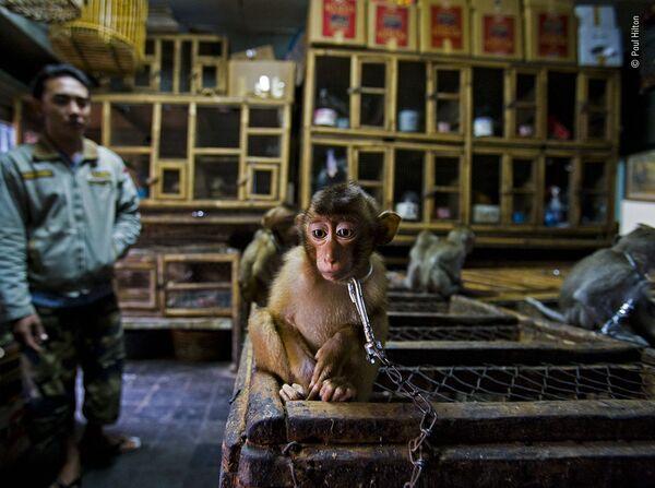Ảnh Hậu trường kinh doanh của nhiếp ảnh gia người Anh gốc Úc Paul Hilton, người đoạt giải Phóng viên ảnh thiên nhiên hoang dã, cuộc thi Wildlife Photographer of the Year 56 - Sputnik Việt Nam