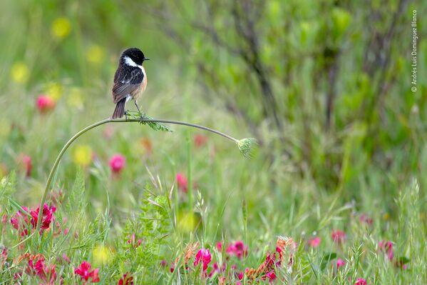 Ảnh «Cân bằng hoàn hảo» của nhiếp ảnh gia Tây Ban Nha Andrés Luis Dominguez Blanco, người chiến thắng hạng mục Dưới 10 tuổi trong cuộc thi Wildlife Photographer of the Year 56 - Sputnik Việt Nam