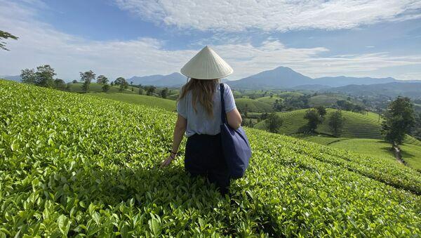 Cô gái đội nón trên nền đồi chè Long Cốc - Sputnik Việt Nam