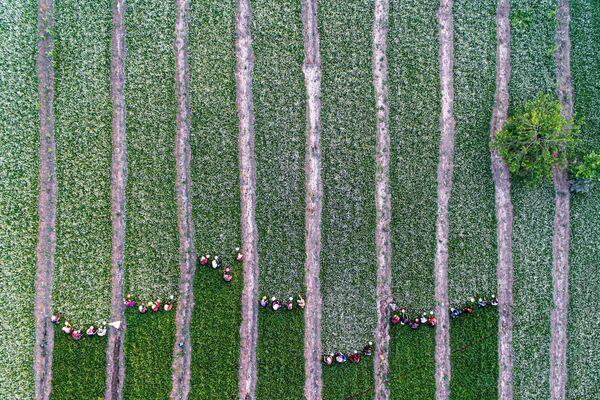 Tác phẩm Những người phụ nữ hái hoa cúc của nhiếp ảnh gia Iran Kaveh Seyedahmadian, đứng thứ hai trong hạng mục Thiên nhiên / Góc nhìn từ trên cao /  Droner tạiInternational Photography Awards 2020 - Sputnik Việt Nam