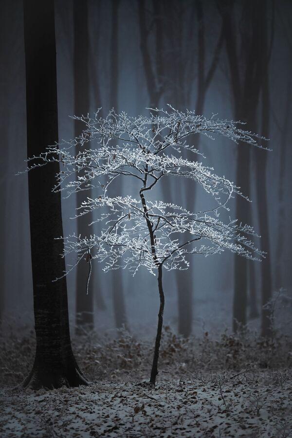 Bức ảnh Luminescent của nhiếp ảnh gia Romania Fabian Balint, người chiến thắng trong số những người không chuyên trong hạng mục Thiên nhiên / Cây cối tại International Photography Awards 2020 - Sputnik Việt Nam