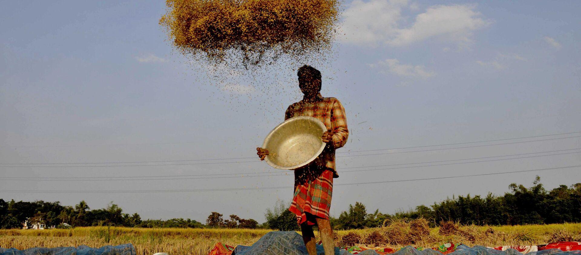 Một nông dân sàng gạo ở ngoại ô thành phố Agartala, Ấn Độ - Sputnik Việt Nam, 1920, 01.11.2020