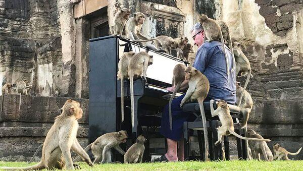 Nhạc sĩ người Anh Paul Barton chơi đàn cho khỉ nghe ở Lop Buri, Thái Lan - Sputnik Việt Nam