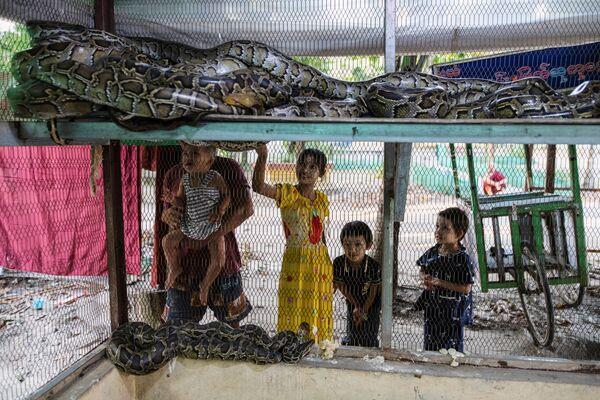 Gia đình du khách xem những con rắn được giải cứu trong ngôi chùa ở Myanmar - Sputnik Việt Nam