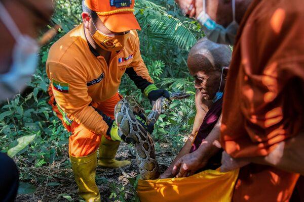 Nhân viên cứu hộ và nhà sư thả con trăn vừa được giải cứu vào khu rừng ở Myanmar - Sputnik Việt Nam