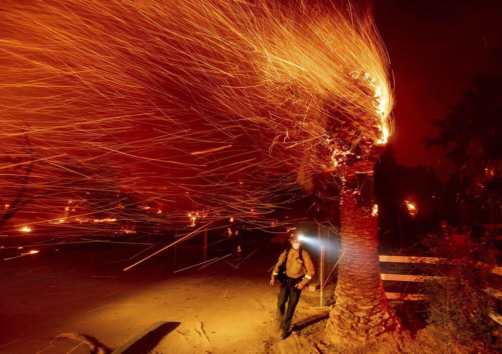 Người lính cứu hỏa đi ngang qua cái cây đang cháy trong khi dập tắt đám cháy trong cộng đồng Silverado ở California