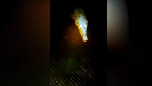 Muốn tắm hồ ban đêm nhưng hoá ra làm phiền cá sấu. - Sputnik Việt Nam