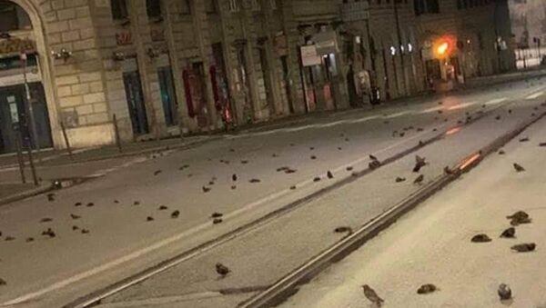 Thảm sát chim ở Rome vào đêm giao thừa - Sputnik Việt Nam