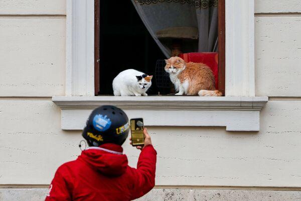 Người qua đường chụp ảnh con mèo trên cửa sổ ngôi nhà ở Rome - Sputnik Việt Nam
