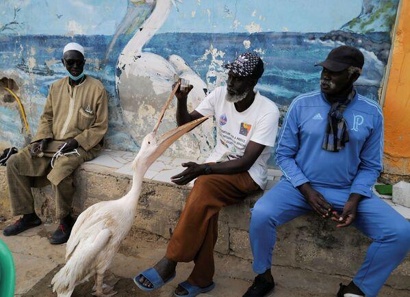 Người đàn ông ngồi bên cạnh con bồ nông của mình ở Senegal - Sputnik Việt Nam