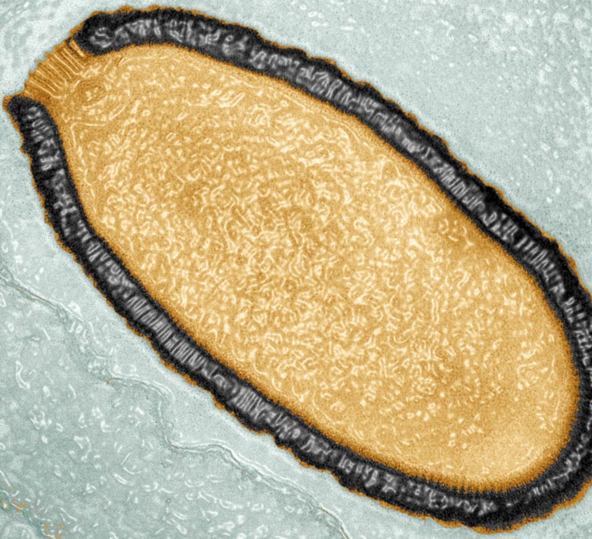 Các virus và vi khuẩn cổ xưa được phát hiện trong lớp băng vĩnh cửu nguy hiểm như thế nào? - Sputnik Việt Nam, 1920, 07.03.2021