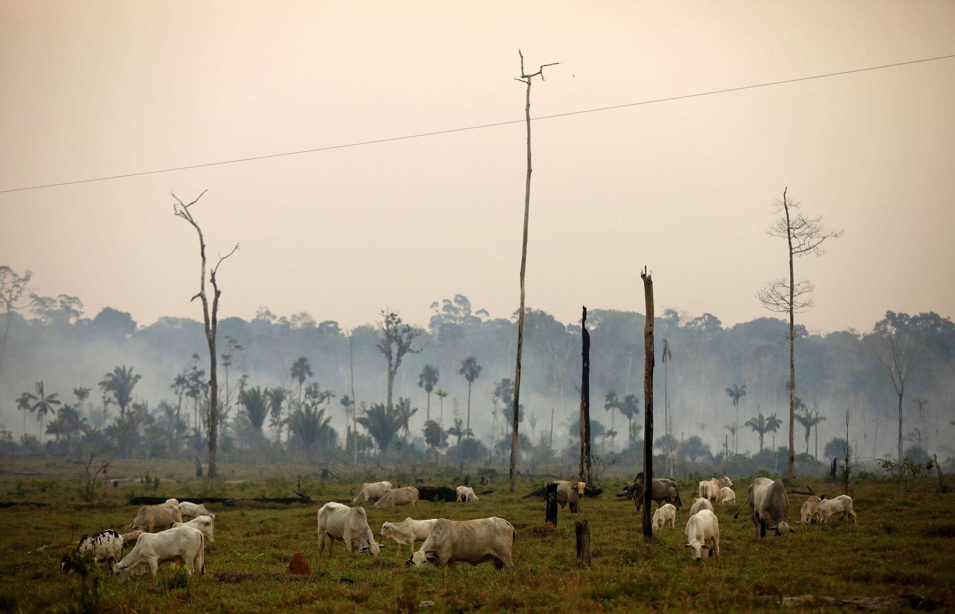 Tình trạng tàn phá hàng loạt rừng nhiệt đới sẽ dẫn đến những thay đổi thảm khốc - Sputnik Việt Nam, 1920, 17.03.2021