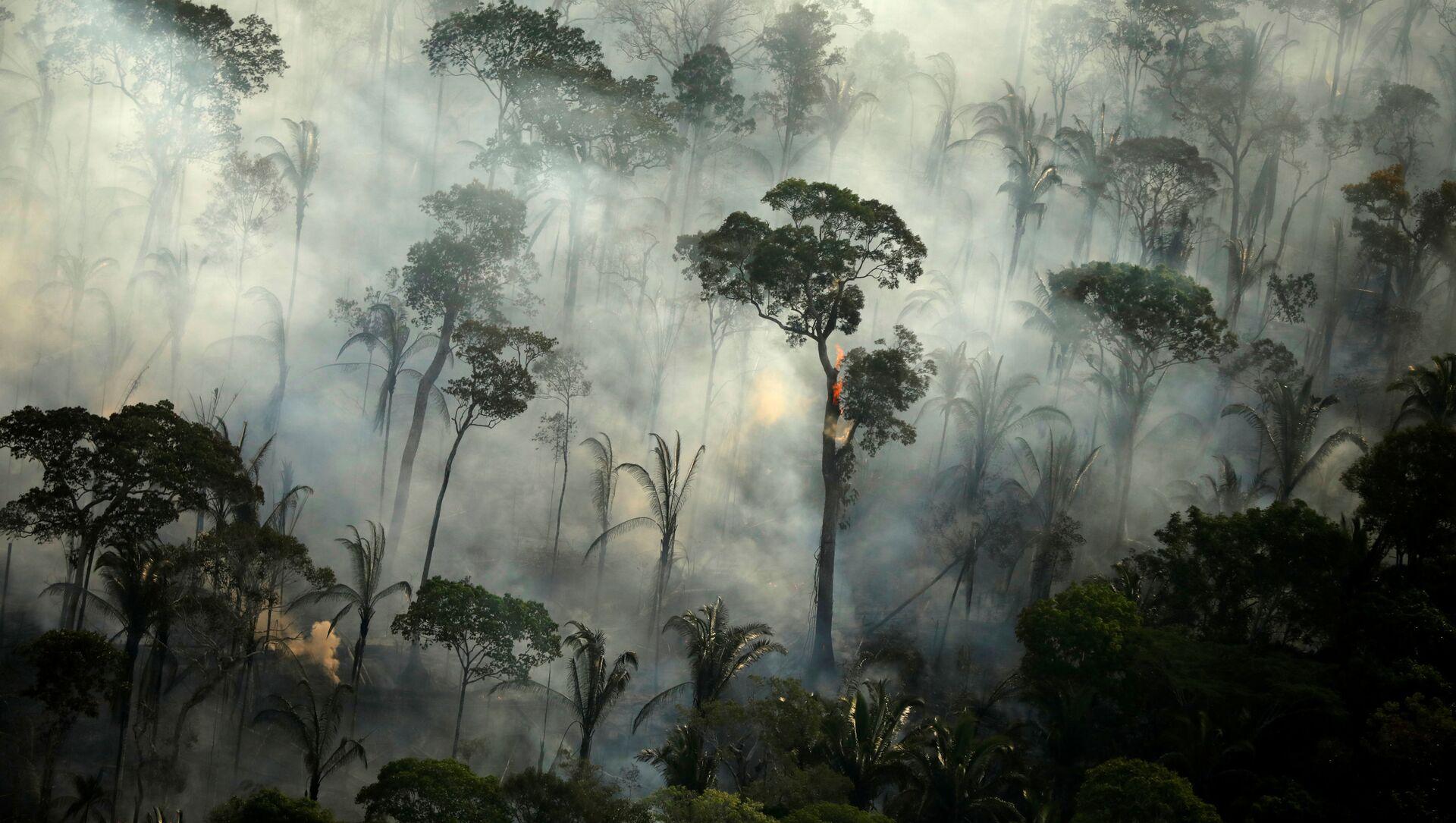 Khói bao trùm một khu rừng đang cháy trong một trận hỏa hoạn ở khu vực rừng nhiệt đới Amazon, Brazil. - Sputnik Việt Nam, 1920, 17.03.2021