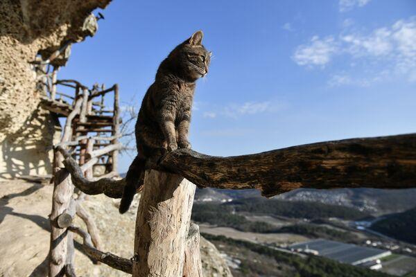 Một con mèo trên đất của tu viện hang động Chelter-Marmara ở Crưm - Sputnik Việt Nam