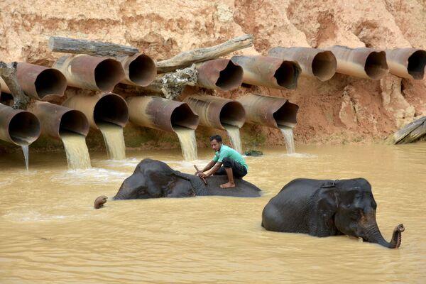 Một nài voi tắm cho voi ở tỉnh Riau, Indonesia - Sputnik Việt Nam