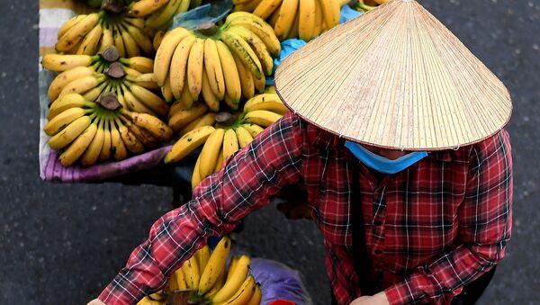 Hàng chuối trên xe đạp ở Hà Nội - Sputnik Việt Nam
