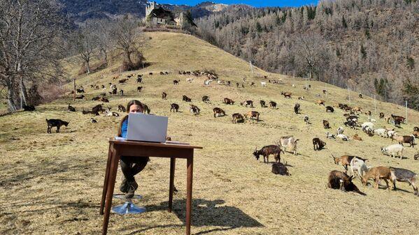 Cô bé Fiammetta 10 tuổi trong buổi học trực tuyến quanh bầy dê của người cha chăn cừu trên đồng cỏ ở Caldes, Ý - Sputnik Việt Nam