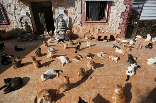 Mái ấm cho những con mèo Ernesto ở Idlib, Syria - Sputnik Việt Nam