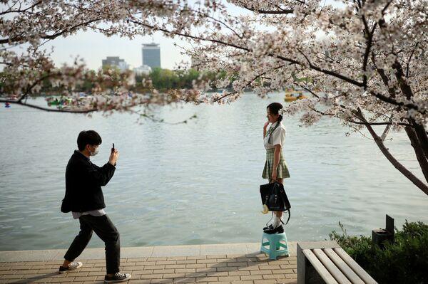 Du khách chụp ảnh trên nền hoa anh đào nở rộ trong công viên Ngọc Uyên Đàm ở Bắc Kinh - Sputnik Việt Nam
