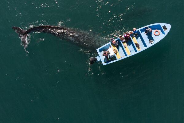 Ảnh chụp từ trên không: Cá voi xám bên chiếc thuyền với những người quan sát ở Mexico - Sputnik Việt Nam