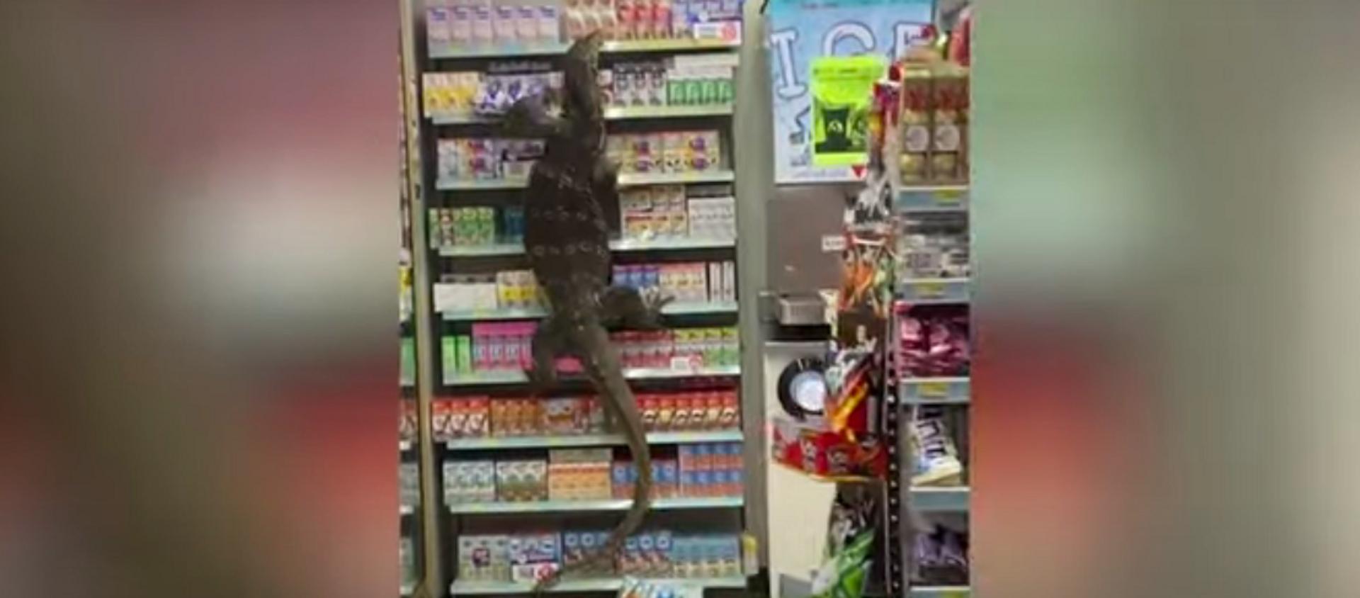 Thằn lằn đói bò trên kệ hàng trong siêu thị ở Thái Lan khiến khách hàng sợ hãi. - Sputnik Việt Nam, 1920, 09.04.2021