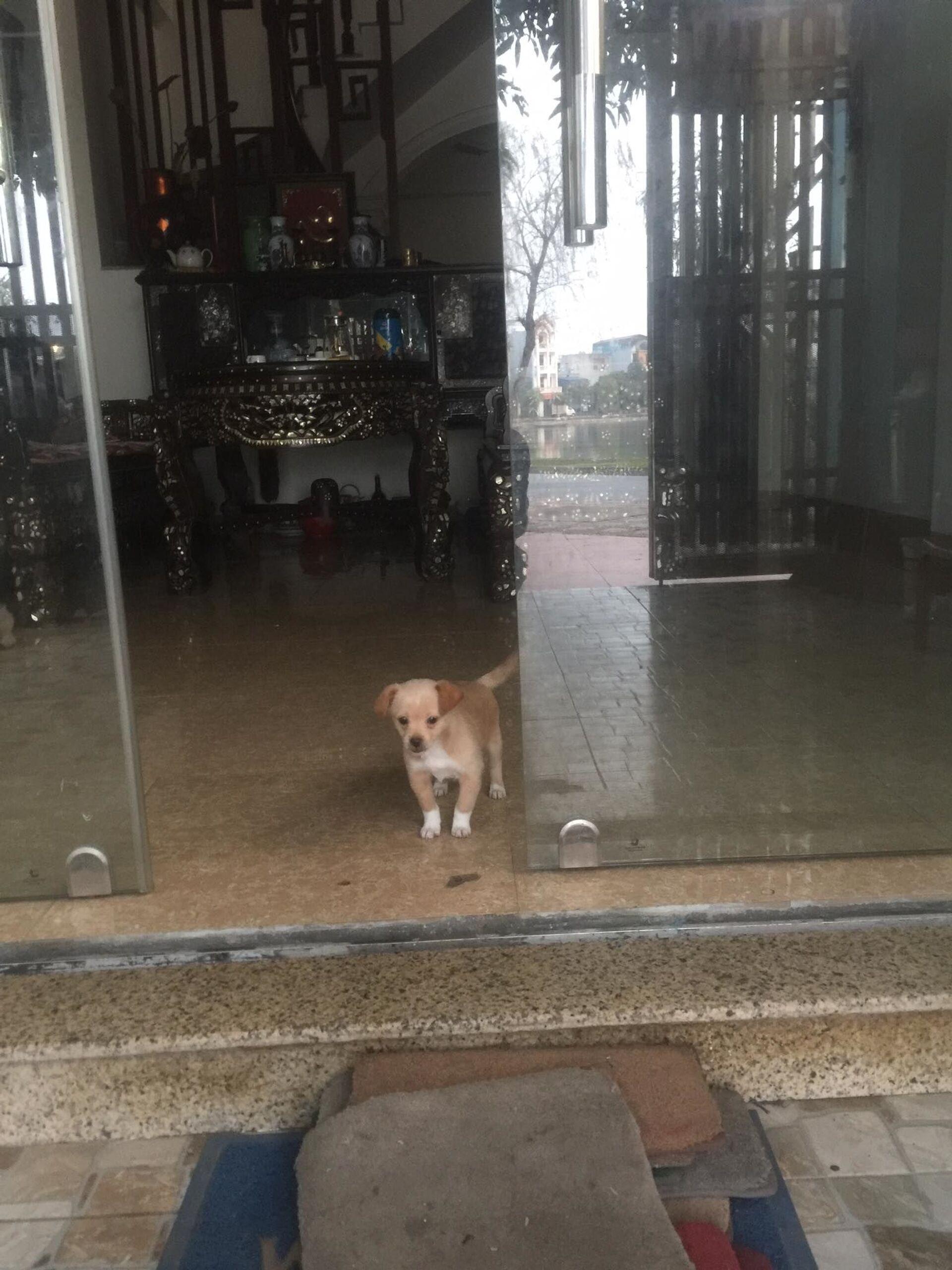 Hug your dog day – Giới trẻ Việt Nam ôm chó thật lâu, dắt chó đến nhà hàng - Sputnik Việt Nam, 1920, 10.04.2021