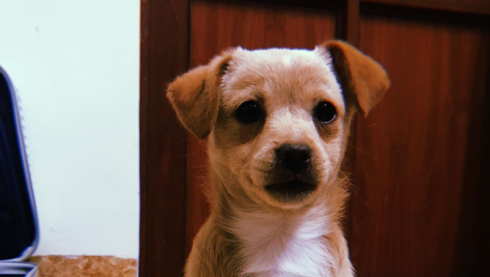 Pet - chú chó cưng của anh Tiến Thành - Sputnik Việt Nam, 1920, 10.04.2021