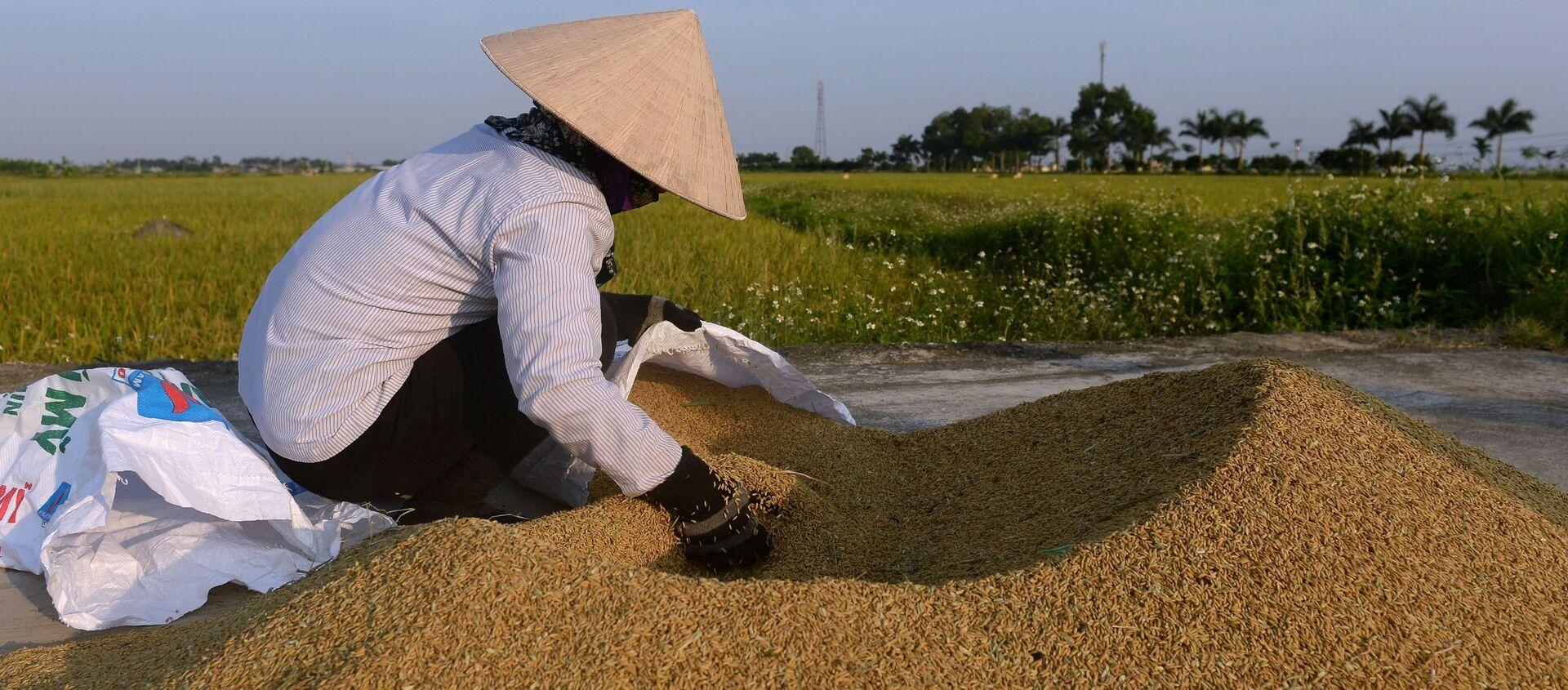 Фермер на рисовом поле на окраине Ханоя, Вьетнам - Sputnik Việt Nam, 1920, 24.04.2021
