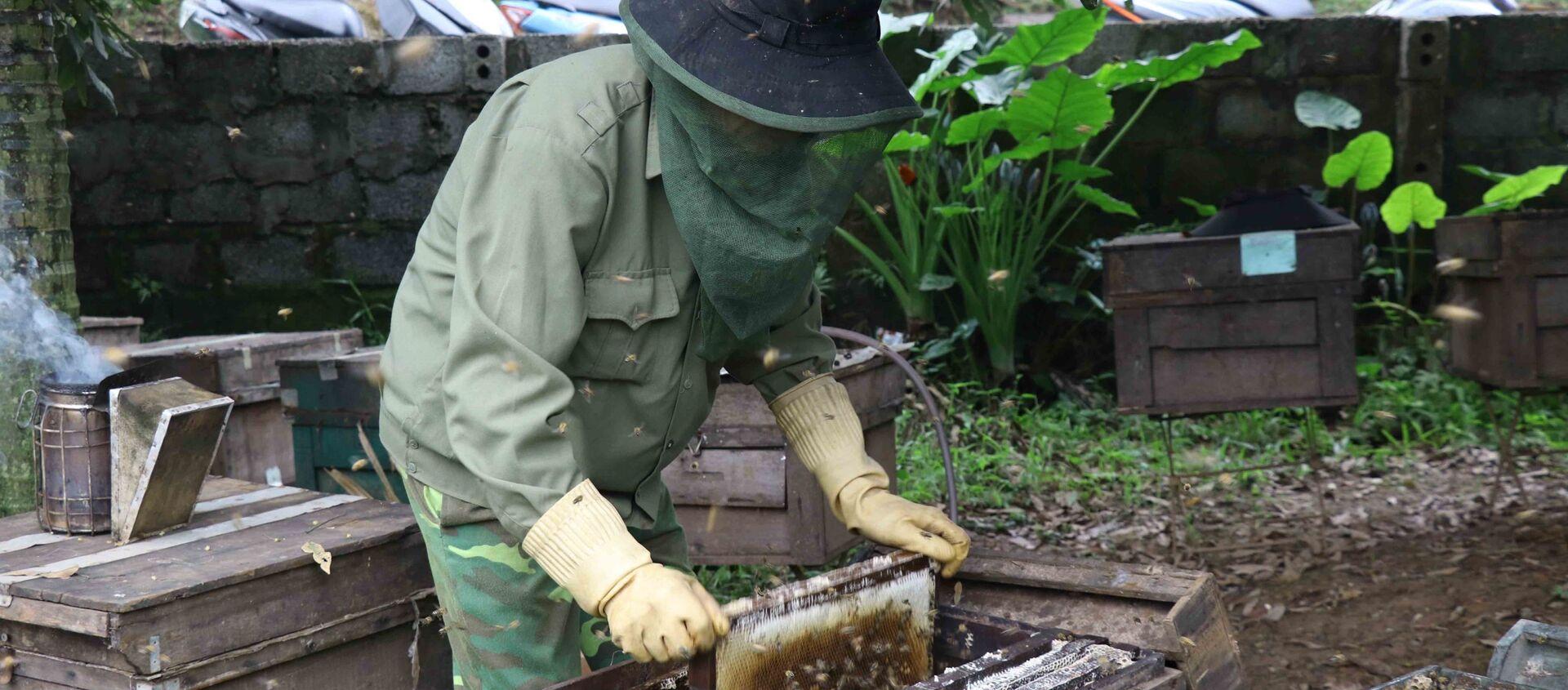 Người dân lấy cầu đựng ong ra khỏi thùng mang đi lấy mật. - Sputnik Việt Nam, 1920, 01.05.2021