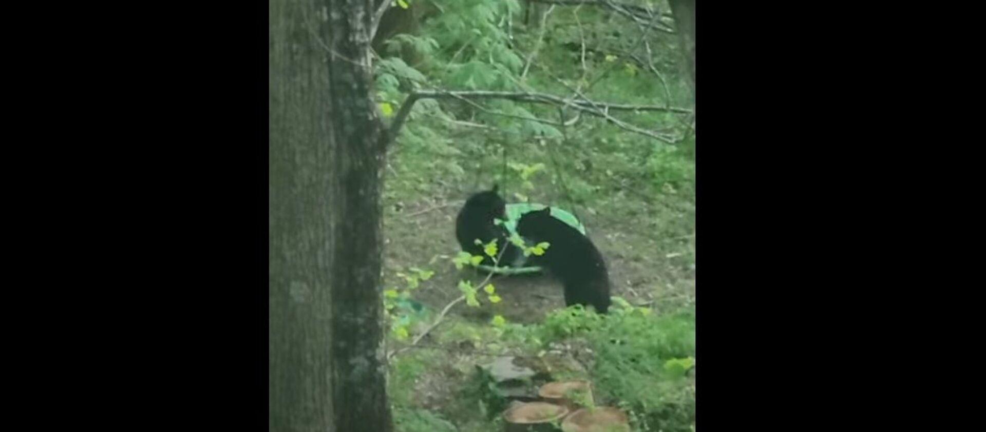 Ngày gia đình! Video những con gấu chơi đùa trên xích đu - Sputnik Việt Nam, 1920, 07.05.2021