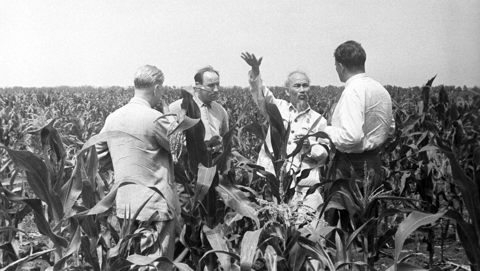 Chủ tịch Hồ Chí Minh ở Crưm. - Sputnik Việt Nam, 1920, 19.05.2021