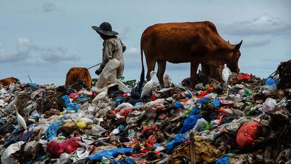 Một người chăn thả bò tại bãi rác sau lễ Eid al-Fitr, Indonesia. - Sputnik Việt Nam