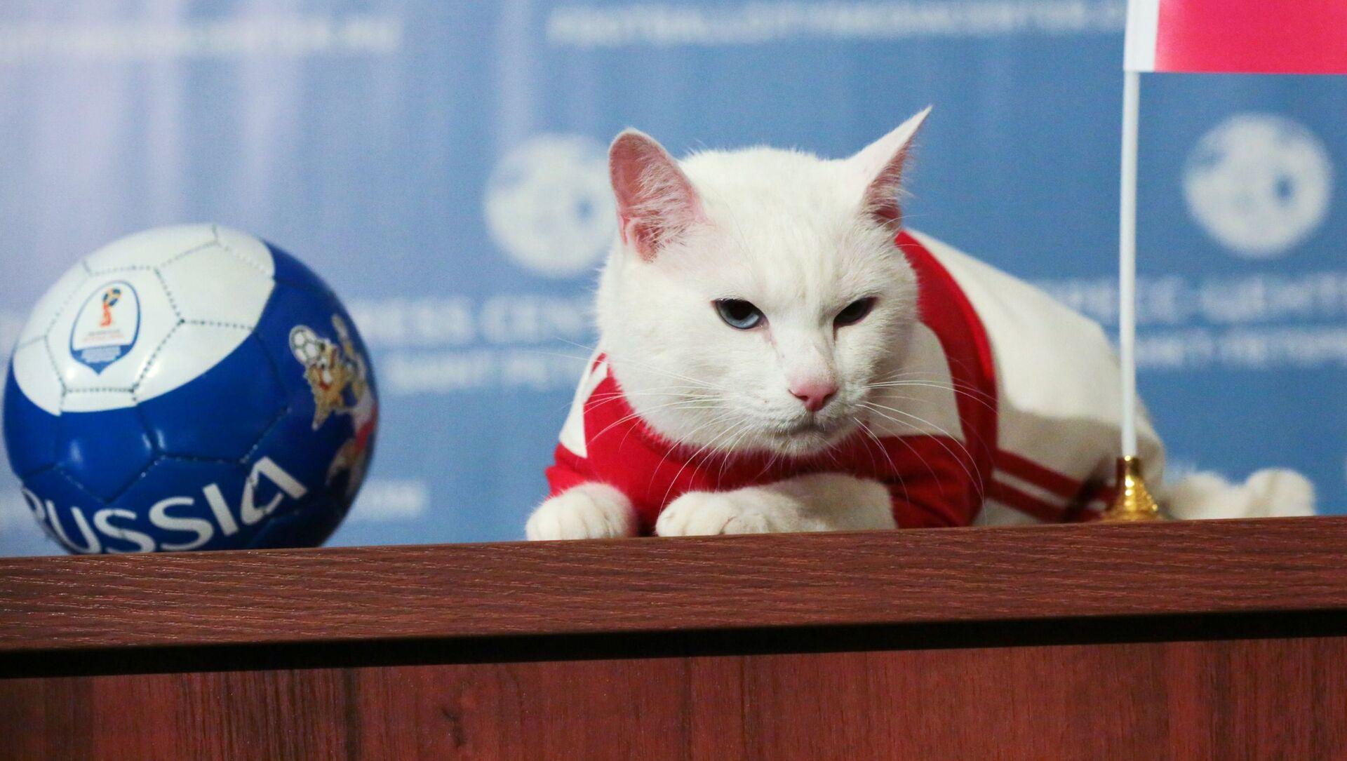 Mèo Achilles dự đoán chiến thắng của đội tuyển quốc gia Nga trước Ả Rập Saudi trong trận mở màn World Cup FIFA 2018. - Sputnik Việt Nam, 1920, 24.05.2021