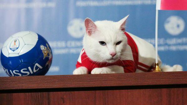 Mèo Achilles dự đoán chiến thắng của đội tuyển quốc gia Nga trước Ả Rập Saudi trong trận mở màn World Cup FIFA 2018. - Sputnik Việt Nam