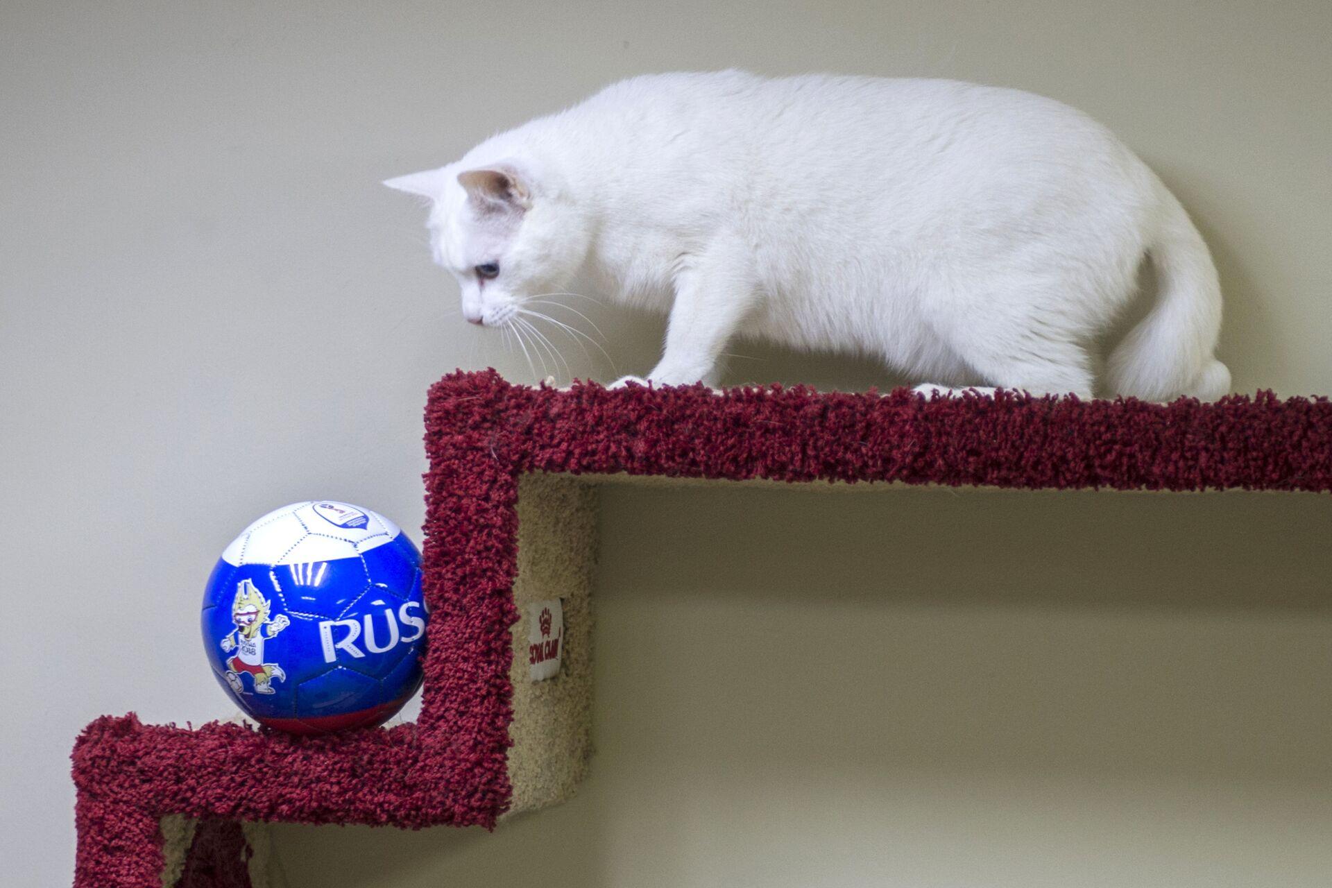 Mèo Achilles trở thành nhà tiên tri giải vô địch EURO 2020 - Sputnik Việt Nam, 1920, 24.05.2021
