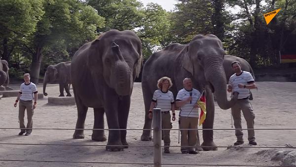 Nhà tiên tri mới tại EURO 2020 là một chú voi - Sputnik Việt Nam