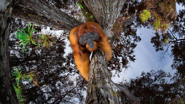 """Bức ảnh """"The World is Going Upside Down"""" (Thế giới lộn ngược) của Thomas Vijayan, người đoạt giải Nature TTL Photographer of the Year  năm 2021 - Sputnik Việt Nam"""