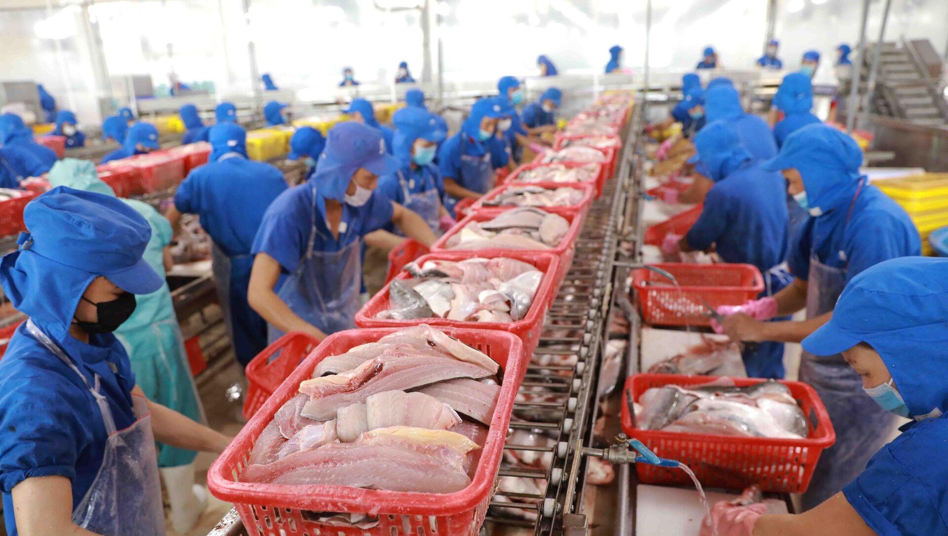 5 tháng đầu năm, cá tra xuất khẩu sang thị trường Mỹ đang trên đà phục hồi và đạt 135 triệu USD, tăng 57% so với cùng kỳ năm 2020. - Sputnik Việt Nam, 1920, 04.06.2021