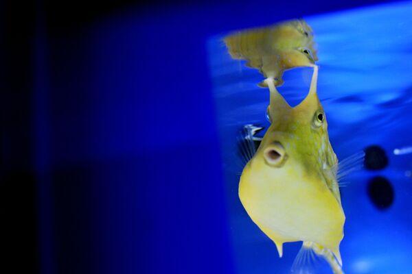 Giống cá lạ trong bể cá từ triển lãm về các loài cá và thực vật kỳ lạ sống ở biển Địa Trung Hải và các con sông ở Ý - Sputnik Việt Nam