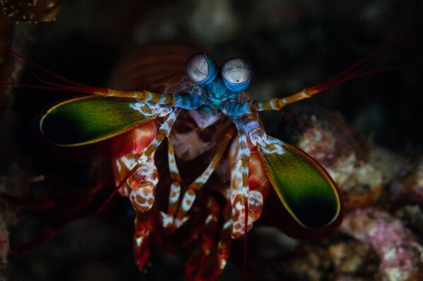 Tôm bọ ngựa dưới đáy biển eo biển Lembe ở Bắc Sulawesi, Indonesia - Sputnik Việt Nam