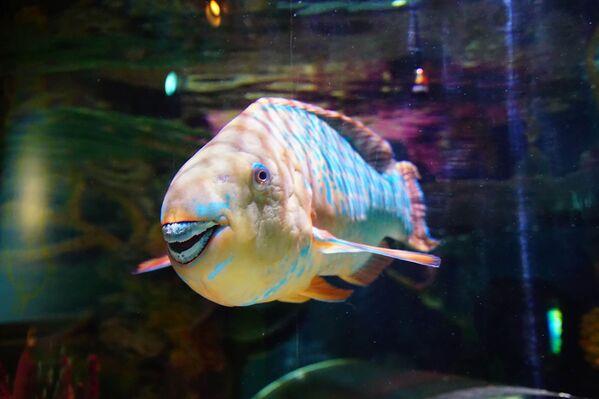 Cá vẹt đang khoe hàm răng, Oregon - Sputnik Việt Nam