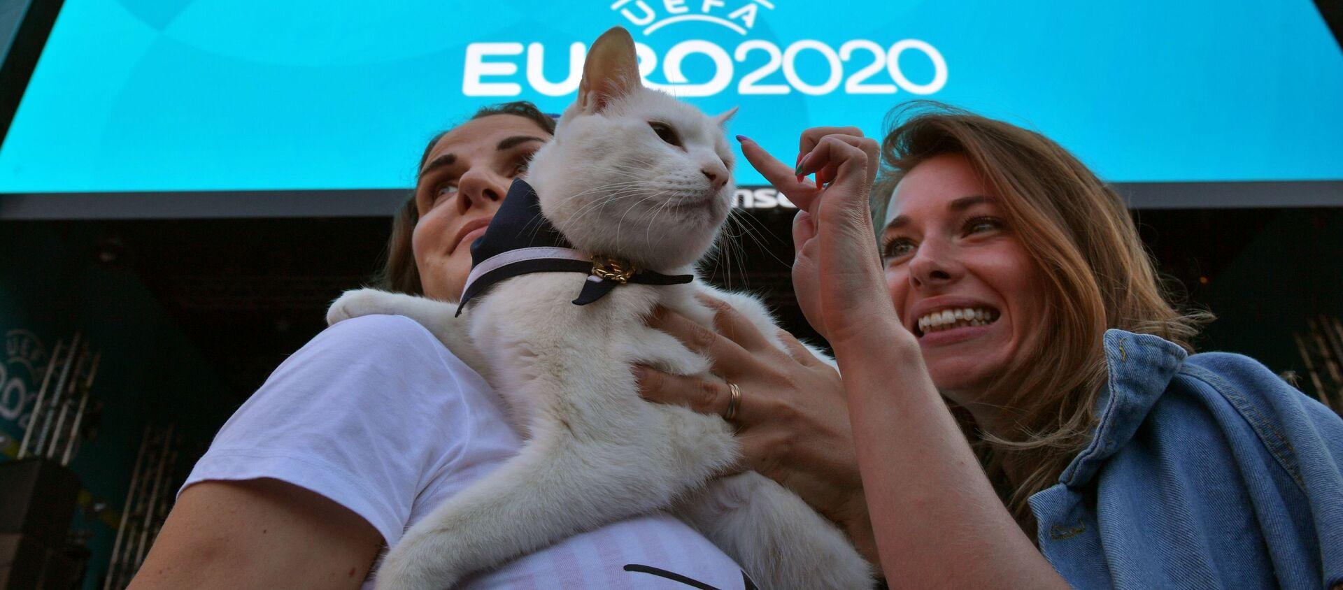 Chú mèo tiên tri Achilles trước giờ phát sóng lượt trận đầu vòng bảng giải vô địch UEFA EURO 2020. - Sputnik Việt Nam, 1920, 15.06.2021