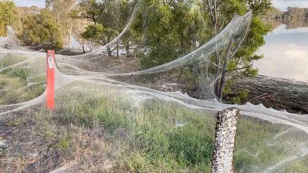 Đầm lầy ở Úc phủ đầy mạng nhện  - Sputnik Việt Nam