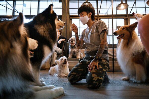 Nhân viên quán cà phê Dog In Town ở Bangkok - Sputnik Việt Nam