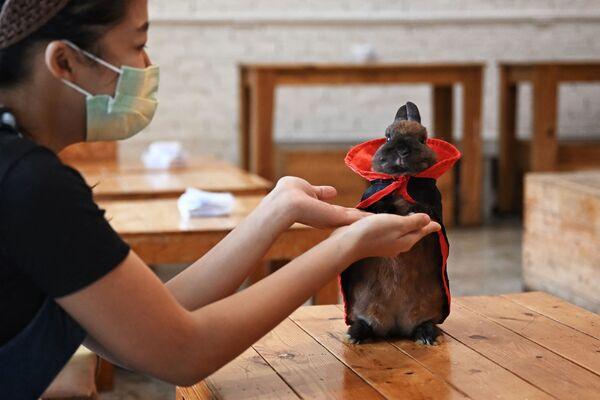 Nhân viên quán Rabbito Cafe ở Bangkok - Sputnik Việt Nam