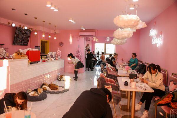 Quán cà phê Hello Corgi ở Thượng Hải - Sputnik Việt Nam